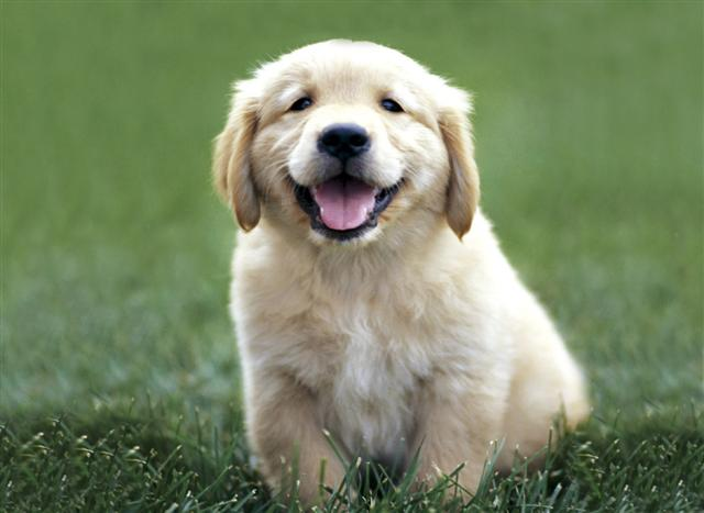 Viral Science: Golden Retrievers Explain Physics