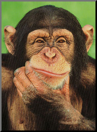 Viral Science: Are you smarter than a chimp?