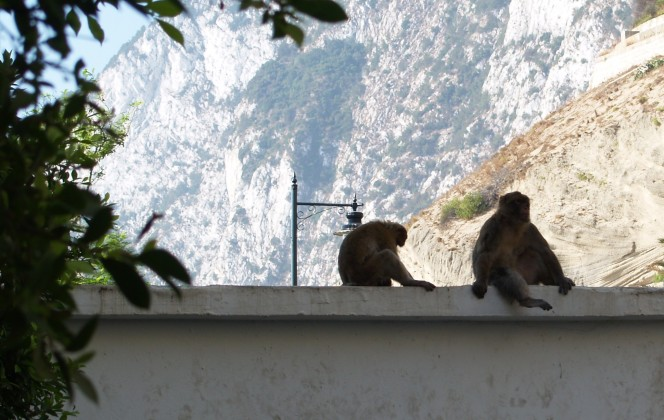 Say Cheese #2: Gibraltar's Barbary Macaques